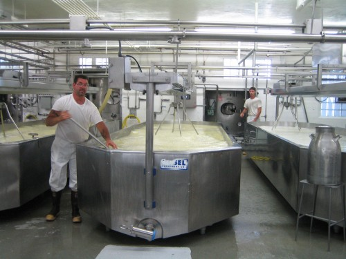 vat of curd
