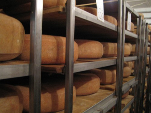 racks of cheese